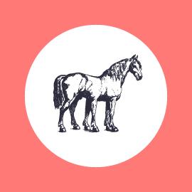 des-cheval-Vignette